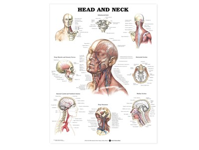Head and Neck Wall Chart