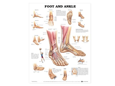 Foot and Ankle Wall Chart