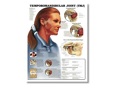 Temporomandibular Joint Wall Chart